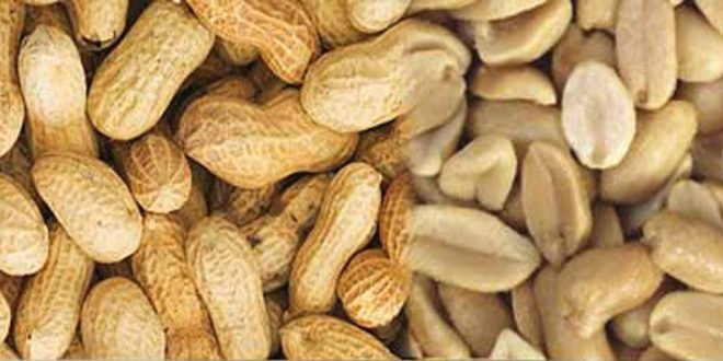 peanut benefits in urdu