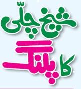 sheikh chilli