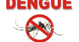 dengue mosquito