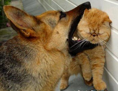 dog-attacks-cat