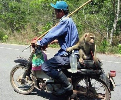 monkey-riding-motorbike-animals